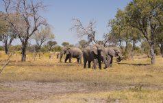 163_Afrika_© Amazing Africa