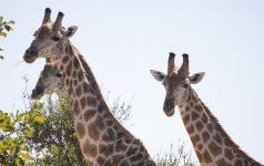 223_Afrika_© Amazing Africa