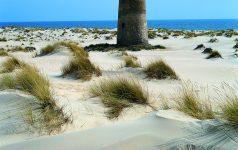 Nationalpark Doñana-Dünen_© Instituto de Turismo de España, TURESPAÑA