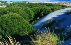 Nationalpark Doñana_© Instituto de Turismo de España, TURESPAÑA