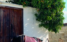 13 Esel_© Cyprus Tourism Organisation