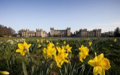 Daffodils at Floors Castle, Kelso, Scottish Borders.   Picture Credit : Paul Tomkins / VisitScotland / Scottish ViewpointTel: +44 (0) 131 622 7174  E-Mail : info@scottishviewpoint.comThis photograph cannot be used without prior permission from Scottish Viewpoint.